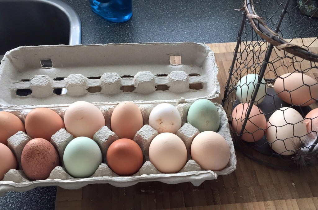Chickens are a great first farm animal to raise. There are a ton of ways you can do so for cheap.   Sell the eggs. People pay for farm fresh, free range, organic eggs. We sell ours at $5.00/doz. I know other farmers that will sell them for more. It's a great way to start building customers, when you get started.