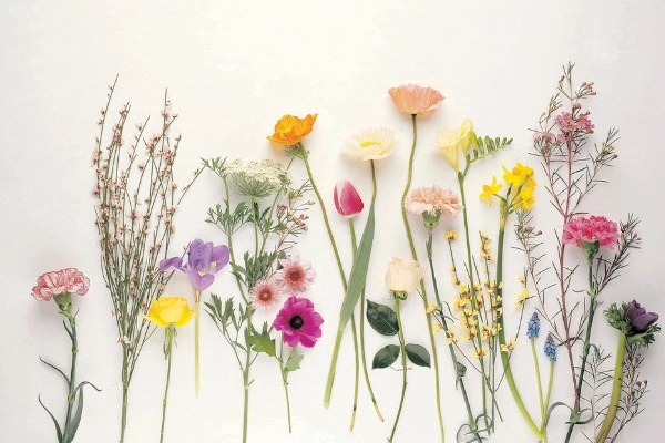 white background with wildflowers