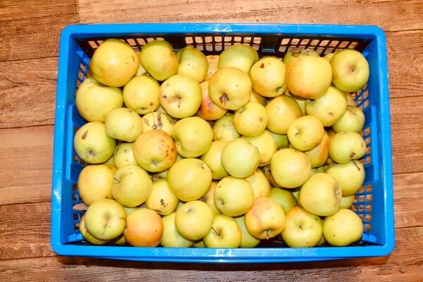 apples 1 OF 76 Things to GROW AND PRESERVE at home to save money at the grocery store, a perfect way to save money on groceries