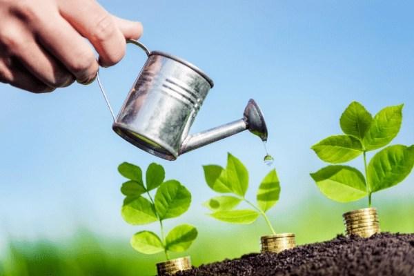 hand watering money plants