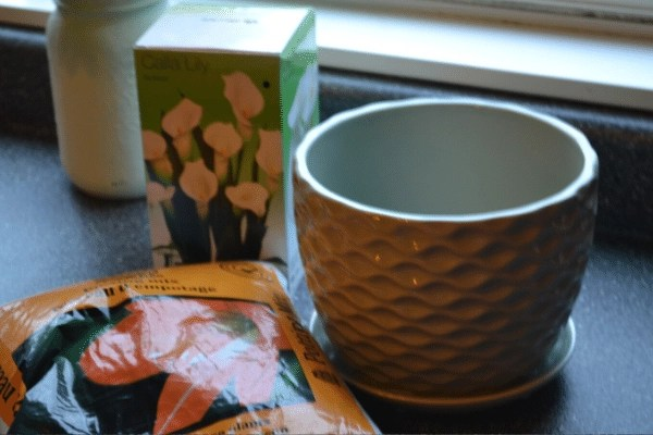 how to plant calla lilies in pots materials, bulbs, pot and soil