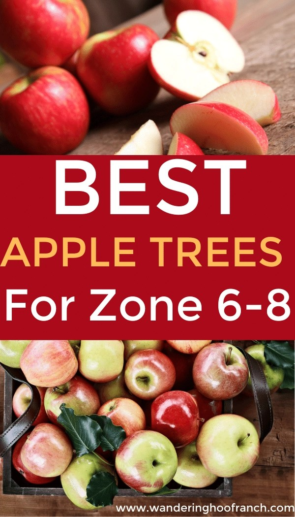 best apple trees for zone 6-8 image