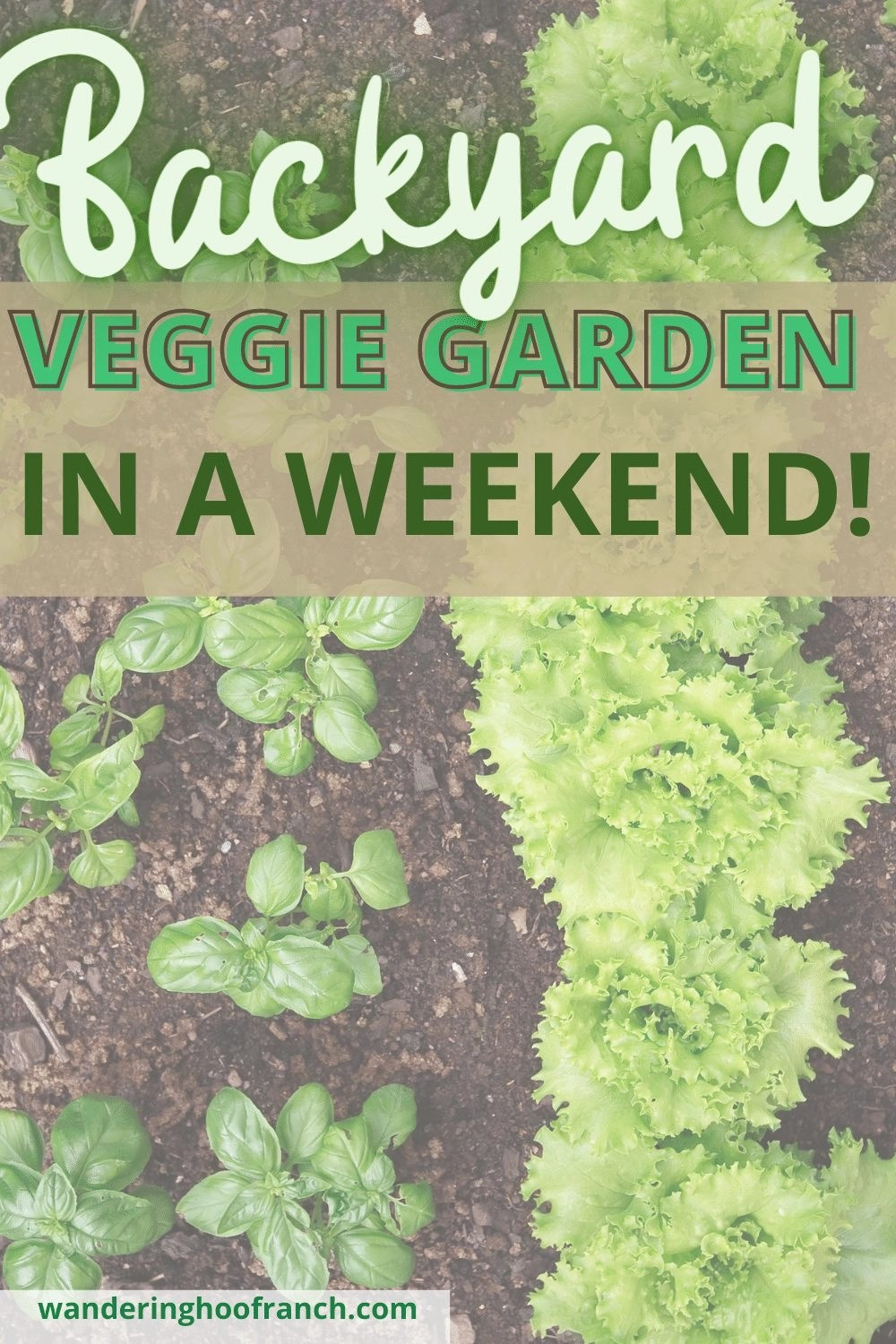 lettuce and basil growing in the ground in a vegetable garden using the back to eden garden method.