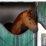 horse boarding in a stall