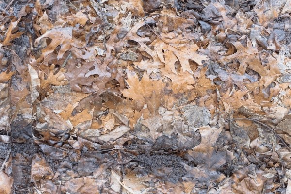dried leaves from the fall in a pile  make great mulch