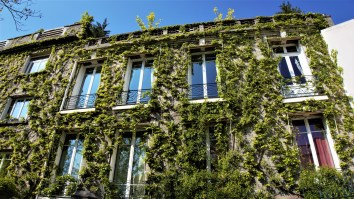 Dream Home - I love ivy!