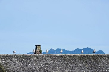 birds on a roof in Tofino