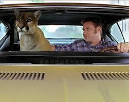 cougar-ricky-bobby