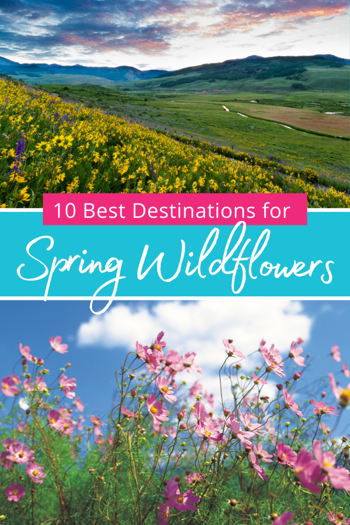 Best Destinations for Spring Wildflowers