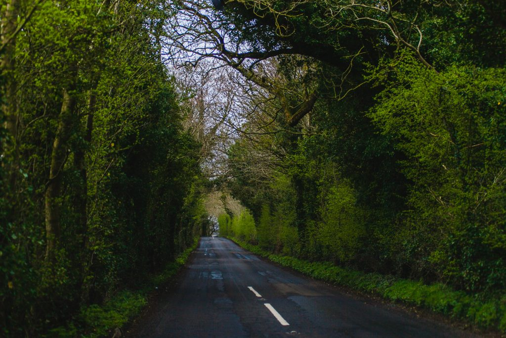 tree tunnel in ireland