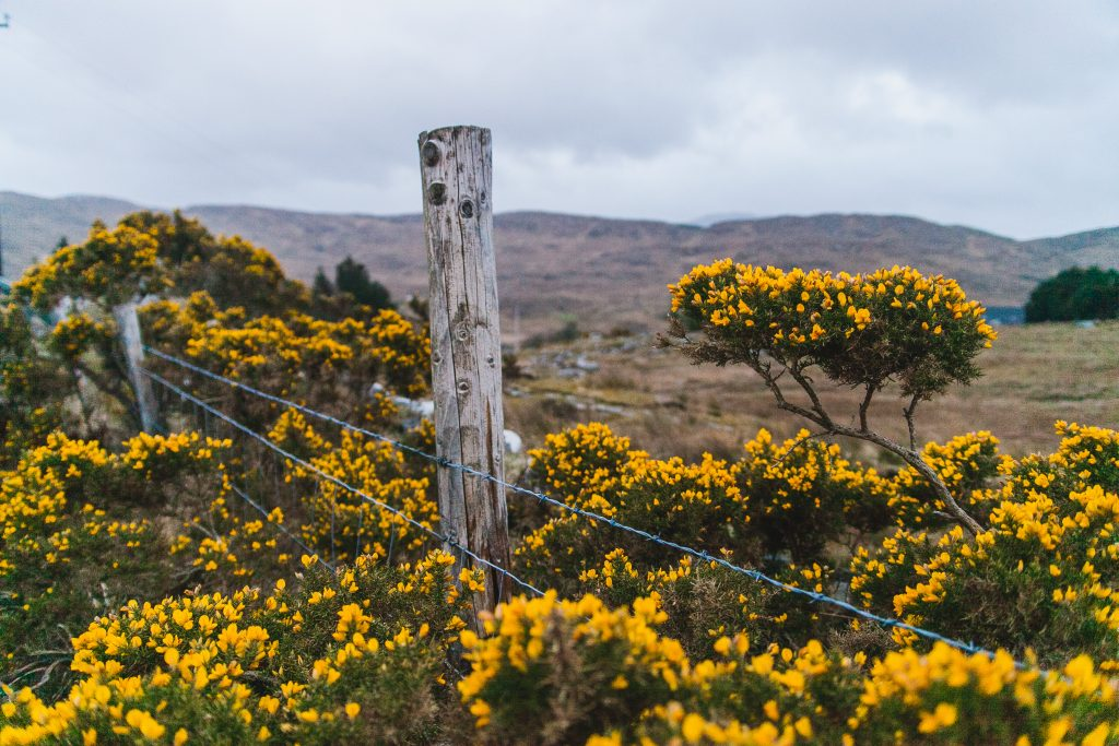 donegal fence with flowers