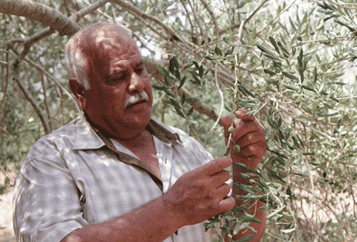 Jenin's olive oil is a tasty reason to visit Jenin when you're in Palestine!