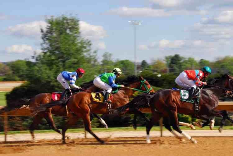 horse racing in Riyadh