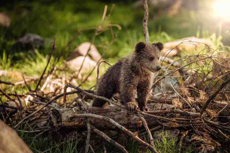 Wildlife in Bulgaria