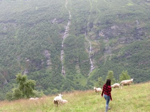 Wild mountain goats run free