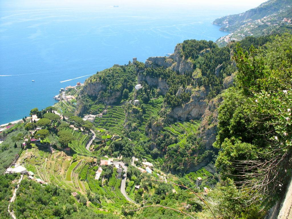 Lemon and Garlic Roasted Broccolini - Amalfi Coast