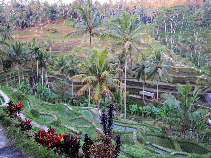 why Ubud Bali is not a tourist trap