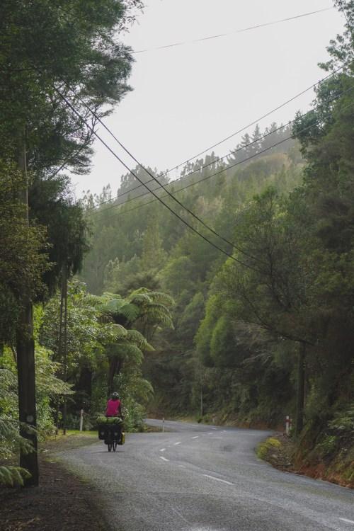 Jurassic Park scenery Sea Bird Coast, North Island New Zealand, cycle touring New Zealand