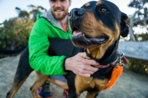 Rottweiler, dog, walk, house sitting
