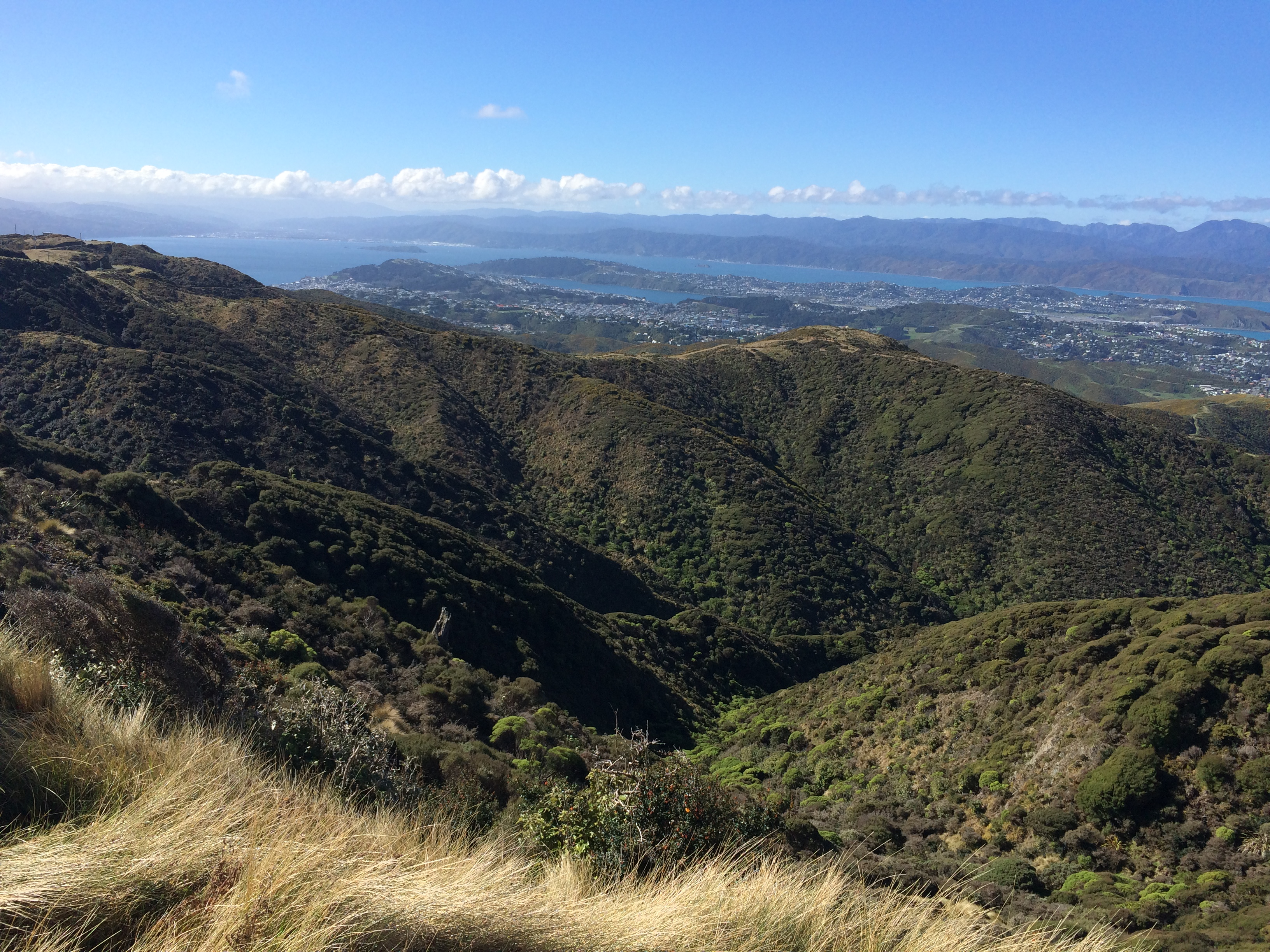 Wellington, New Zealand, hills, trail, running