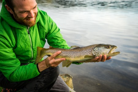 brown trout, new zealand, brownie, fly fishing