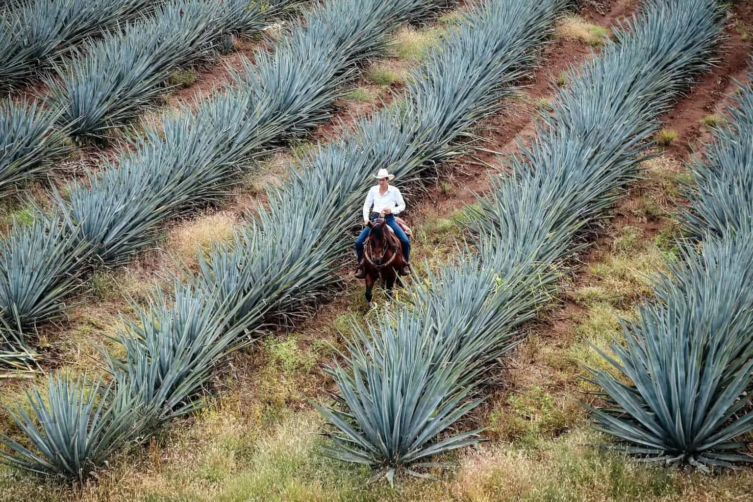 Top things to do in Tequila, Jalisco