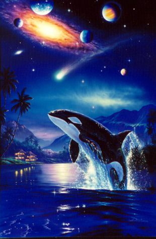 Killer Whale Hd Wallpaper The Best Surfers In The World The Art Of Christian