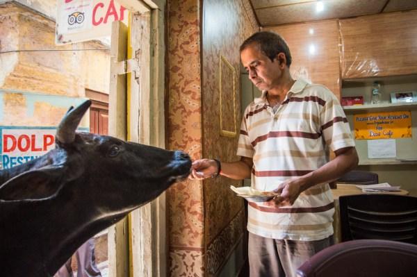 Man Feeding a Cow, Varanasi, India