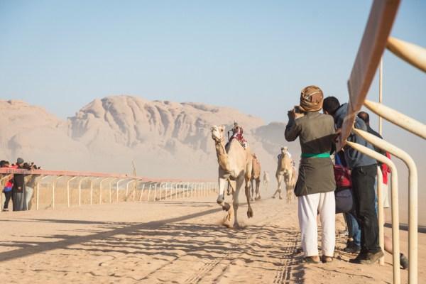 Camel Race, Wadi Rum, Jordan by Wandering Wheatleys