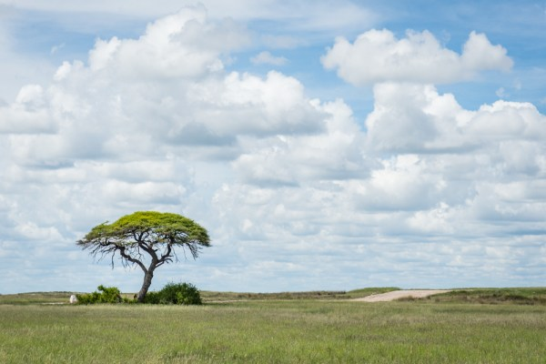 Lone Tree in Etosha National Park by Wandering Wheatleys