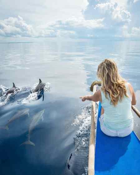 Dolphin Watching, Balabac, Philippines