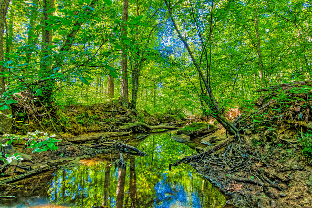 Still creek reflecting trees in forest by Kelly Verdeck