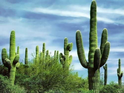 Image Chipmunk Cute Wallpaper Cactus Don T Touch Wander Lord