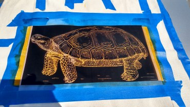 I used a negative transparency to develop a tortoise imprint.