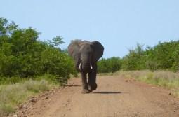 Caution: Elephant Crossing!