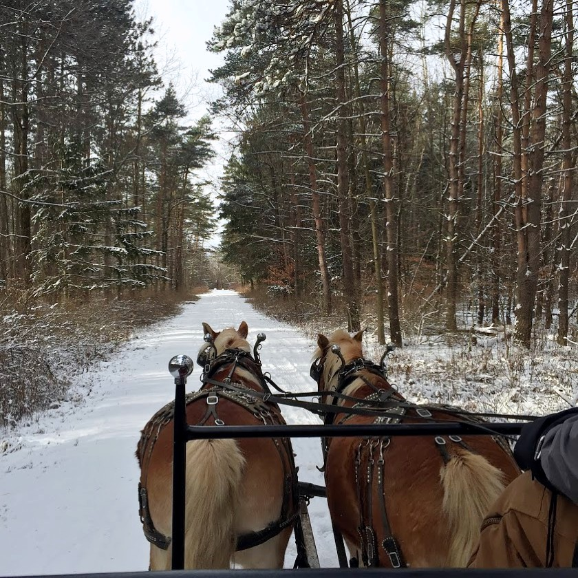 Sleigh Ride at Highland Forest