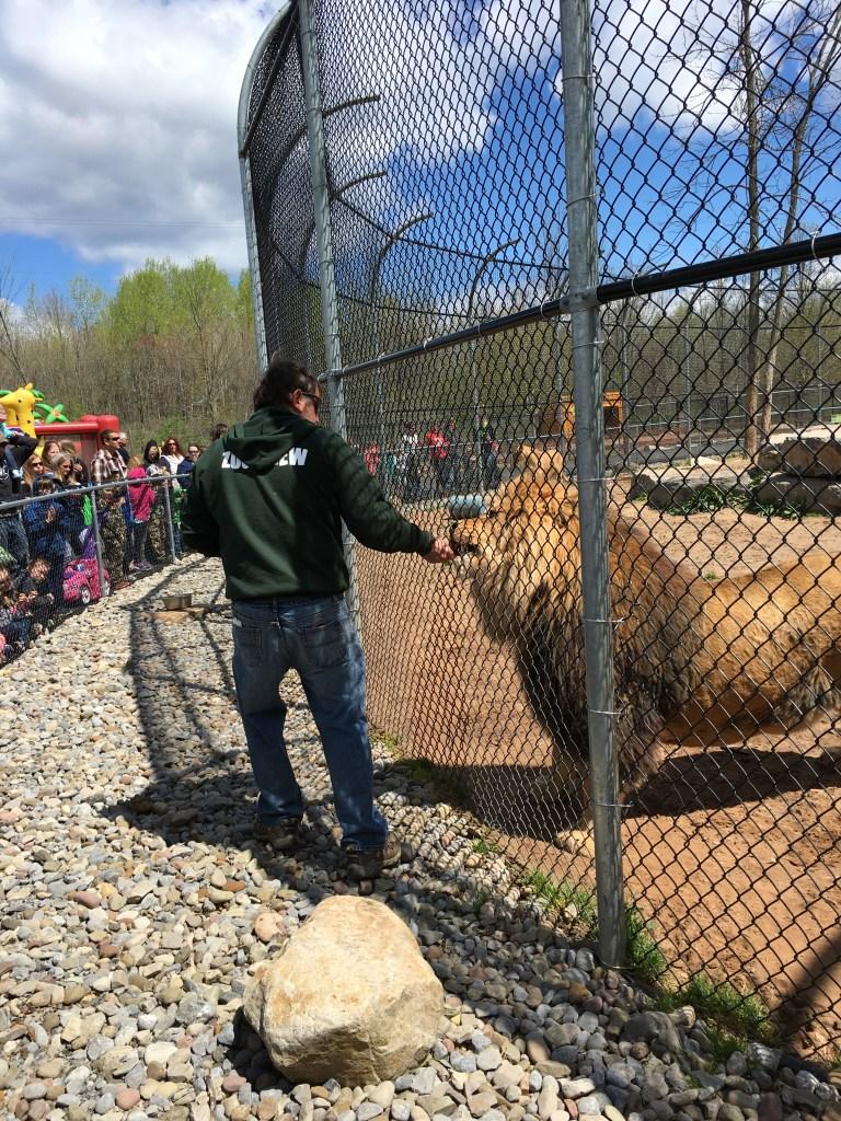 The Wild - Lion