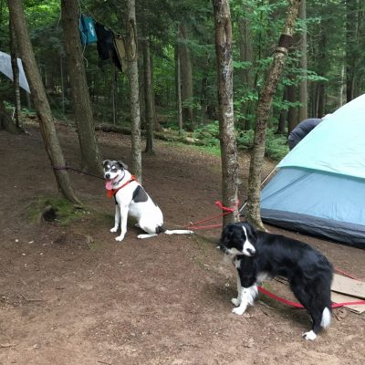 Kit &  Abbey - dogs at campsite