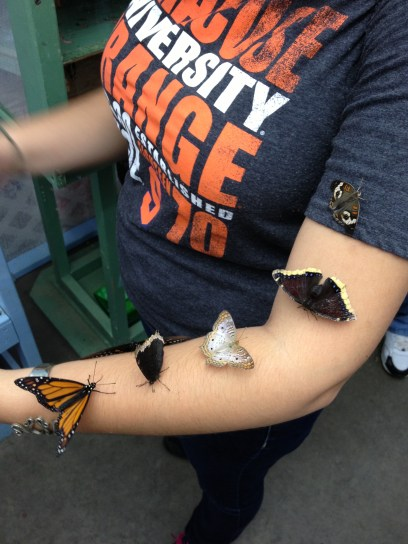 NYSF Butterflies