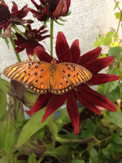 NYSF Butterfly