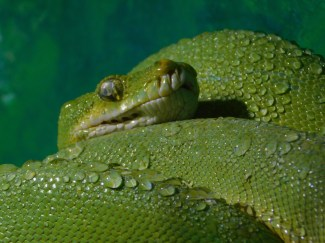 Winter Zoo - Snake