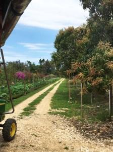 Belize Spice Farm