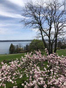 Cayuga Lake - Goose Watch View