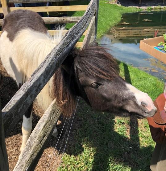Cayuga Lake - Swedish Hill Pony