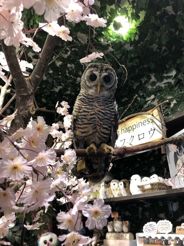 Japan - Owl Forest