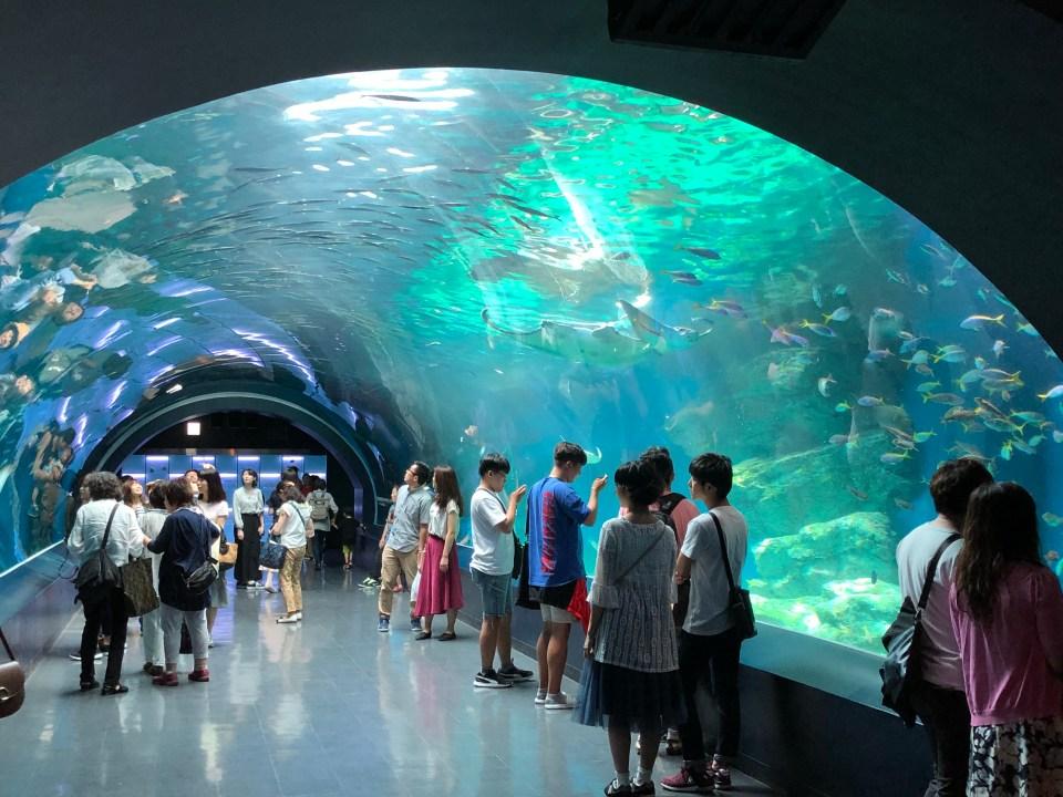 Japan - Maxell Aqua Park Tunnel