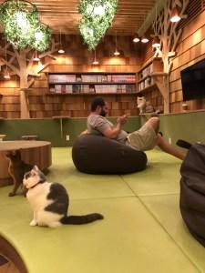 Japan - Akihabara Cat Cafe Chairs