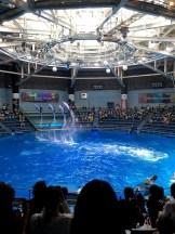 Maxell Aqua Park Dolphins