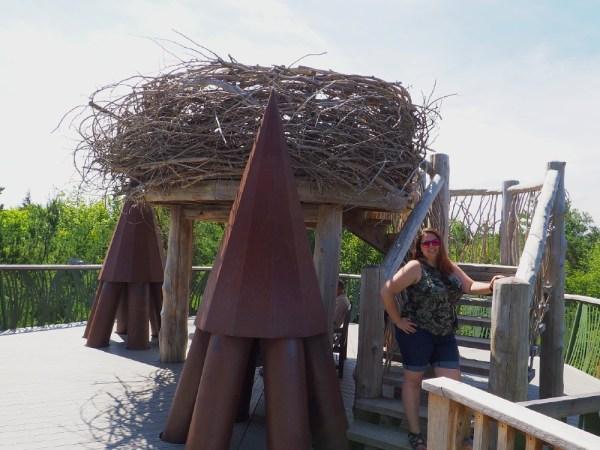 The Wild Center Birds Nest