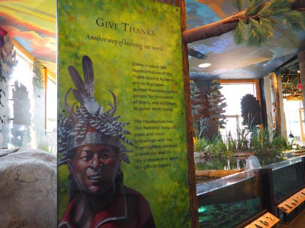 The Wild Center Exhibit